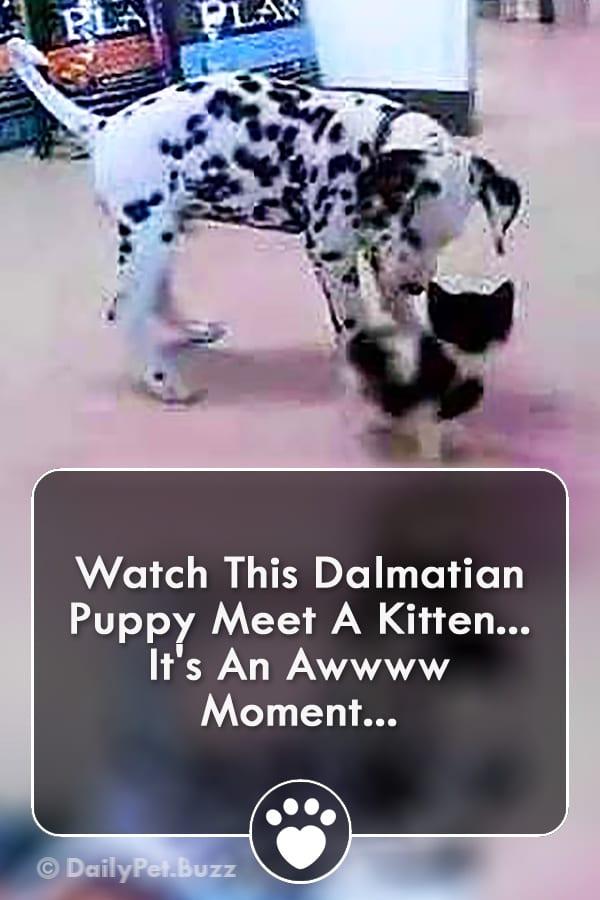 Watch This Dalmatian Puppy Meet A Kitten... It\'s An Awwww Moment...