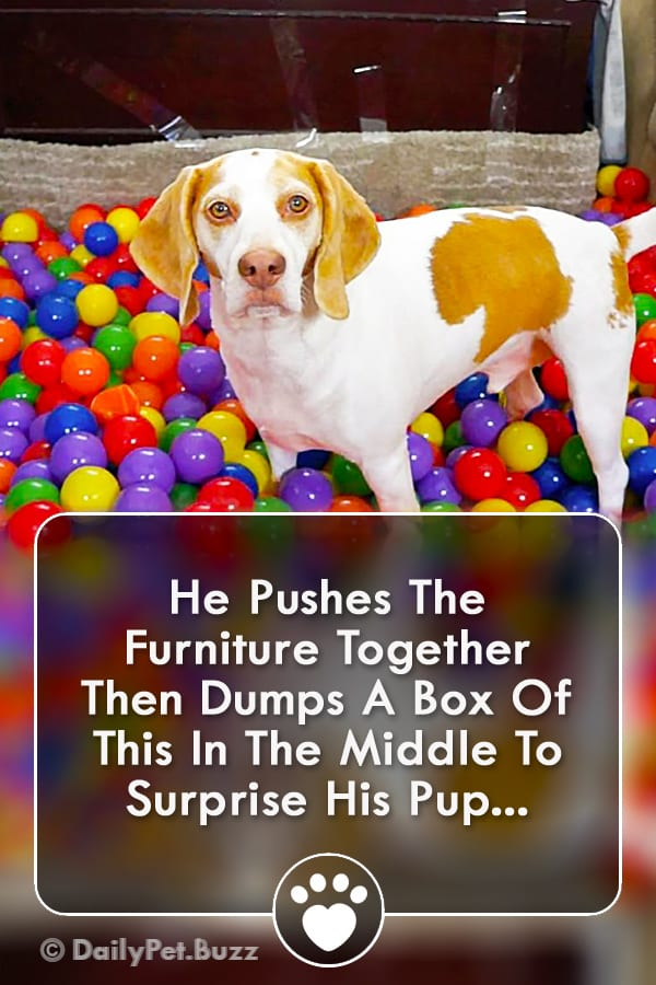 He Pushes The Furniture Together Then Dumps A Box Of This In The Middle To Surprise His Pup...