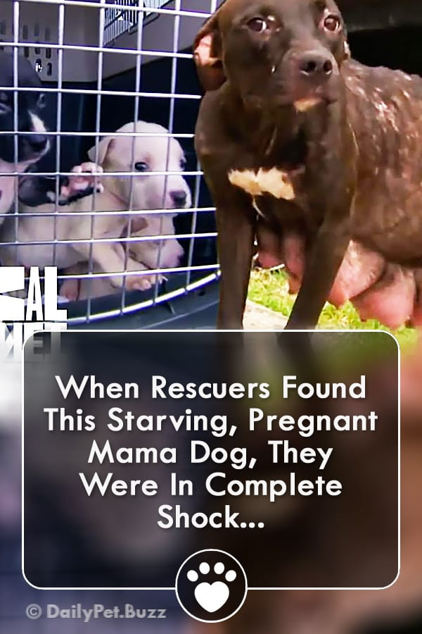 When Rescuers Found This Starving, Pregnant Mama Dog, They Were In Complete Shock...